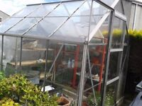 SOLD - Thanks for your interest.......GLASS GREENHOUSE (8 x 6 FOOT) WITH SHELVING FOR SALE.