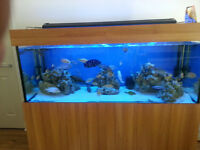 FISH TANK WITH UNIT PELMET 5X2X2