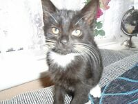 HI I have 1 beautiful kitten left for sell female black and wite