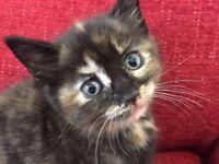 Little Girls - Sisters -Kitten Sweet Love