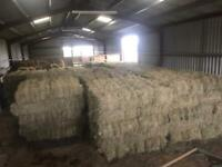 This years square hay bales