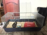 Two female guinea pigs and cage for sale