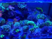 Corals for marine aquarium. Hammers. Dunkans. Mushrooms.anemones