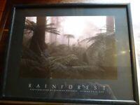 "Vintage Athena® Small Wooden Athena Poster Print Picture - ""Rainforest"""