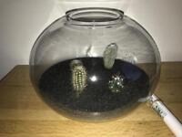 Cactus bowl garden (indoor)