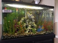 Complete 30G fishtank w/ stand & everything needed.
