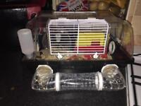 Robovorski dwarf hamsters with cage and accessories