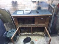 2 x Rabbits and hutch for rehoming