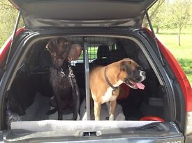 TRAVALL dog guard and divider for VOLVO XC90 2002+