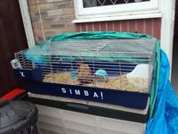 rabbit and cage