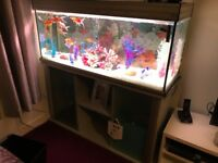 Beautiful fish tank open to offers