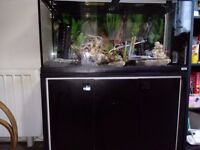 A BRAND NEW FLUVAL ROMA 200L fish tank with cabinet black and all ornaments