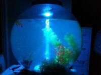 60l biorb classic aquarium / fish tank plus many extras