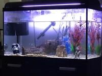 Fishtank & fish & contents