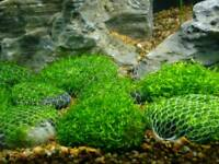 Easy growing fish tank plants