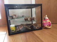 Lovely glass Gerbil/Hamster cage