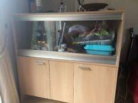 Bearded Dragon vivarium cabinet with accessories