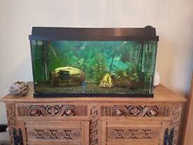 Aquarium Tropical Fish Tank 98 Litres inc. Accessories and Tropical Fish