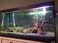 Fluval Roma 200 fish tank and stand - complete set-up for tropical fish!