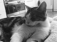 Missing Cat In Chingford!!