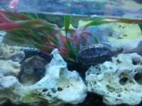 7 BEAUTIFUL TURTLES