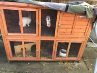 2 female rabbits & double hutch
