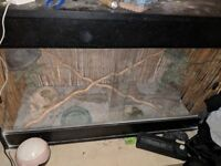 Complete Vivarium set up ready for Beardie or other reptiles