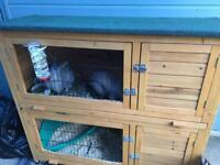2 x Female Rabbits and Accessories