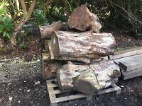 Big tree logs to go