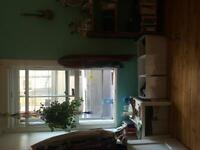 Beautiful bright room in the plateau/mile end