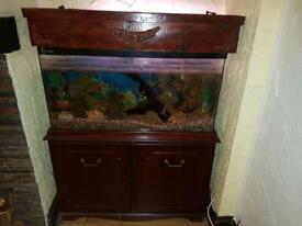 Tropical Full Fish Tank - 3Ft Set Up