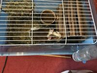 2 Guinea Pigs and 2 cages for sale