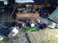 FLYING FUR ANIMAL RESCUE & REFUGE LOOKING FOR UNWANTED PET FOOD