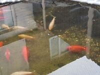 Established fish pond for sale