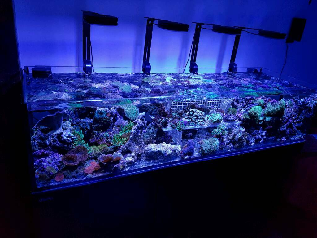 Corals, matured live rocks, dry real reef rocks for marine aquarium
