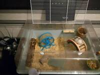 Female hamster + cage