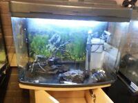 Medium Fish Tank - FishBox