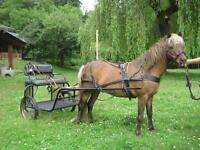 driving cart and all tack for 11-13 hand horse or pony