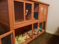 Rabbit with hutch and accessories.