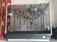 XL cage with 6 budgies male and female £145
