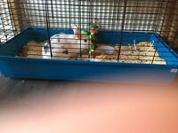 15 month old indoor rabbit and cage for sale due to allergies