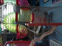 Hamster cage only 2 months old £25.00 when brought cost £50 hamster got to big for it