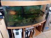 Jewel bow fronted fish tank complete