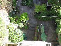 Garden plants in pots.