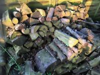 Huge quantity of logs for sale