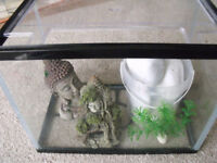 """Small Pet Tank includes ornaments x 2 and 5 large white stones - 12""""L x 7""""W x 9""""H"""
