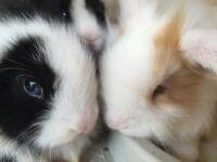 Baby rabbits-bunnies