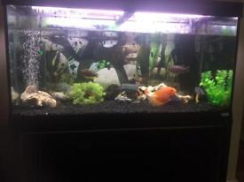Fluval 4ft fish tank