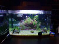 70 Litre Illuminated Aquarium With Ornaments