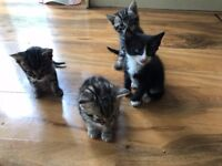 £5 for Kittens - Must be good home